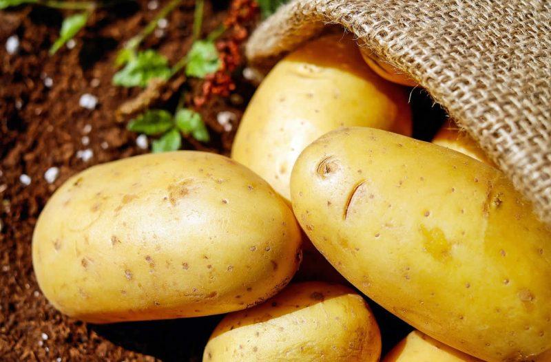 maigrir avec pomme de terre